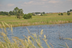 Wetland in Black Hawk County