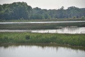 Appanoose County wetland
